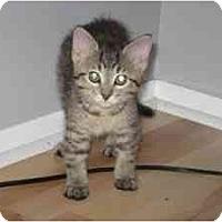 Adopt A Pet :: Dalila - Milwaukee, WI