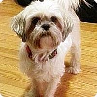 Adopt A Pet :: Bunny - Toronto, ON