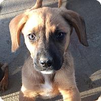 Adopt A Pet :: Ruby's Pup 2 - Long Beach, CA