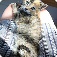 Adopt A Pet :: Apple Fritter - Ann Arbor, MI