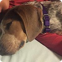 Adopt A Pet :: Ellie Mae - Richmond, VA