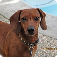 Adopt A Pet :: Magnus - Pearland, TX