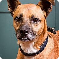 Adopt A Pet :: Vance - DRD Program - Owensboro, KY
