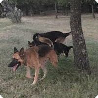 Adopt A Pet :: Duke - Fort Worth, TX