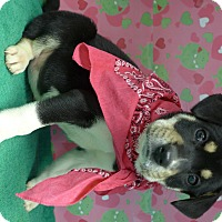 Adopt A Pet :: Magic - Manning, SC