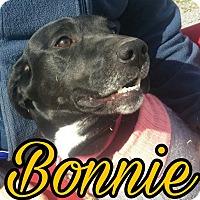 Adopt A Pet :: Bonnie - Union City, TN