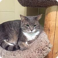 Adopt A Pet :: Jorgia - Sterling Hgts, MI