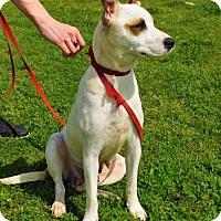 Adopt A Pet :: Mallory-031315k - Tupelo, MS