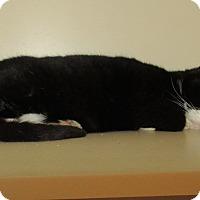 Adopt A Pet :: Jolene  SOS - Elizabeth City, NC