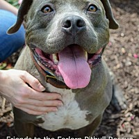 Adopt A Pet :: Charlie Blue - Dallas, GA