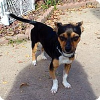 Adopt A Pet :: Sparkles - Silsbee, TX