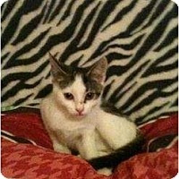 Adopt A Pet :: Clarice - Mobile, AL