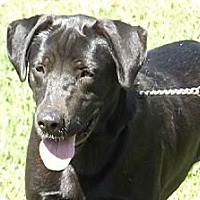 Adopt A Pet :: Luke - Danbury, CT