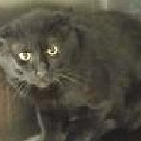 Adopt A Pet :: Shadow - Cleveland, OH