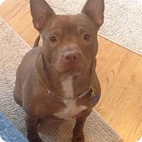 Adopt A Pet :: Frankie - Elderton, PA
