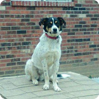 Adopt A Pet :: Howie - Russellville, KY