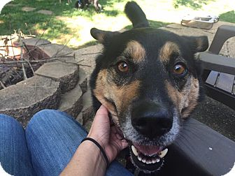German Shepherd Dog/Husky Mix Dog for adoption in Harrisonburg, Virginia - Puddy