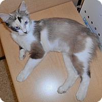 Adopt A Pet :: Sweet Pea - Chattanooga, TN