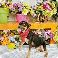 Adopt A Pet :: Prince Eric - Odessa, TX