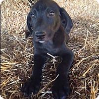 Adopt A Pet :: Collins - Bedminster, NJ