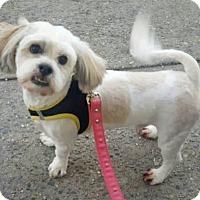 Adopt A Pet :: Scott - Bronx, NY