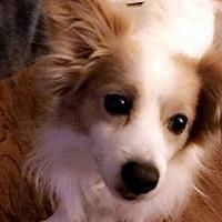 Adopt A Pet :: Max - Adoption Pending! - Farmington Hills, MI
