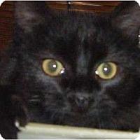 Adopt A Pet :: Benny - Kensington, MD