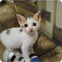 Adopt A Pet :: Vienna - Secaucus, NJ