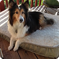 Adopt A Pet :: Taffy - San Diego, CA
