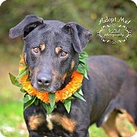 Adopt A Pet :: Mark - Fort Valley, GA