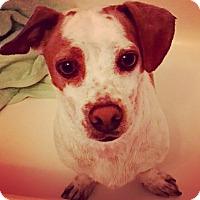 Adopt A Pet :: SKIPPY (video) - Los Angeles, CA