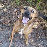 Adopt A Pet :: Dixie - Jefferson, TX