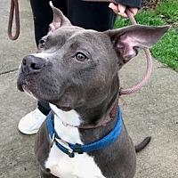 Adopt A Pet :: True - Holly Springs, NC