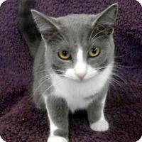 Adopt A Pet :: Hope - Tyler, TX