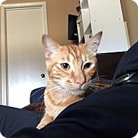 Adopt A Pet :: Jack - Arlington/Ft Worth, TX