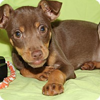 Adopt A Pet :: Cookie (has been adopted) - Trenton, NJ