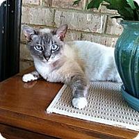 Adopt A Pet :: Tessa - Arlington, VA