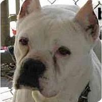 Adopt A Pet :: Beauty - Savannah, GA
