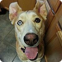 Adopt A Pet :: Christal - Hastings, NY