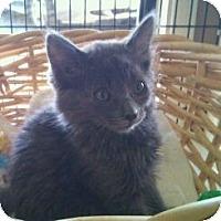 Adopt A Pet :: Todd - Modesto, CA