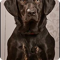 Adopt A Pet :: Chevy - Owensboro, KY