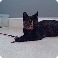 Adopt A Pet :: Corky - McDonough, GA