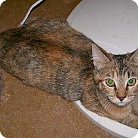 Adopt A Pet :: Marble - Scottsdale, AZ