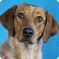 Adopt A Pet :: Sarah - Minneapolis, MN