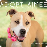 Adopt A Pet :: Aimee - West Grove, PA