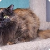 Adopt A Pet :: Candy - Colorado Springs, CO