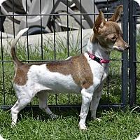 Adopt A Pet :: Rissi - Meridian, ID