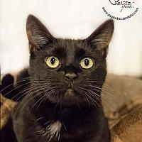 Adopt A Pet :: Natalya - Belton, MO