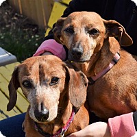 Adopt A Pet :: Ruby and Rusty - York, SC
