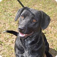 Adopt A Pet :: Zoey - Springfield, MA